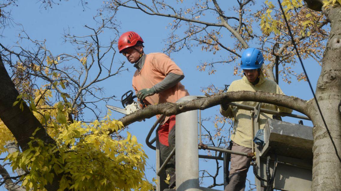 Výzva pre vlastníkov na odstránenie stromov v blízkosti elektrického vedenia