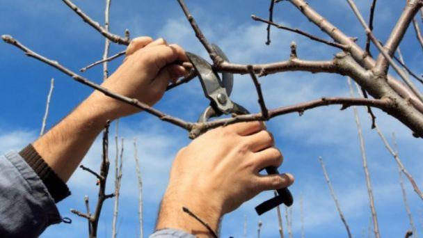 Orez stromov - kontajner